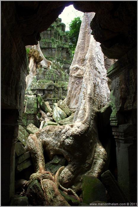 Ta Prohm, Angkor, Siem Reap Province, Cambodia