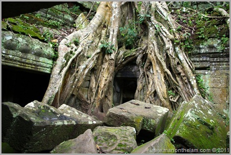Ta Prohm temple with tree and stones Angkor, Siem Reap Province, Cambodia