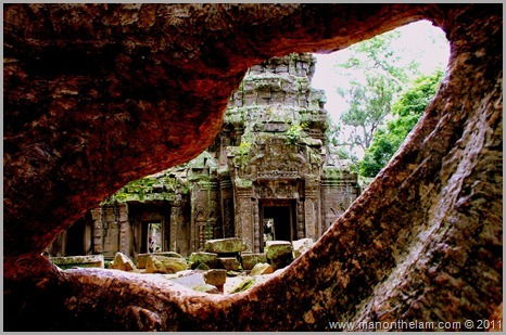 Ta Prohm temple seen through tree, Angkor, Siem Reap Province, Cambodia