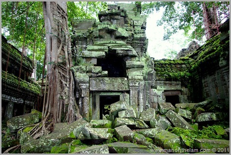 Ta Prohm temple with tree and moss, Angkor, Siem Reap Province, Cambodia