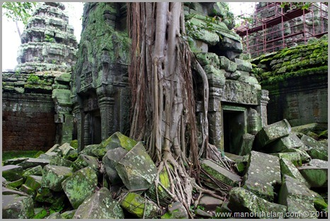 Temple with tree and moss