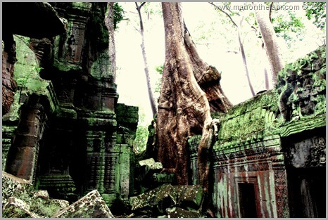 Ta Prohm temple with tree and moss, Angkor, Siem Reap Province