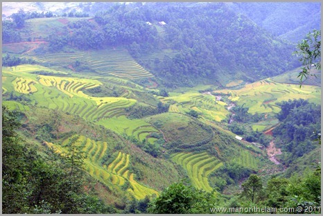 Rice paddy fields in Sapa Vietnam
