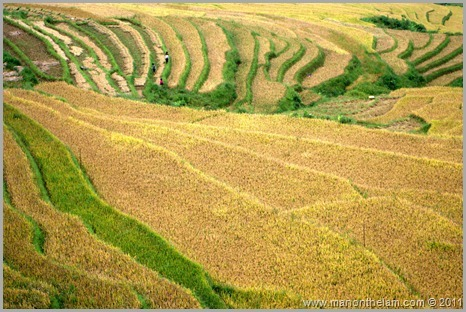 Rice paddy fields in Sapa