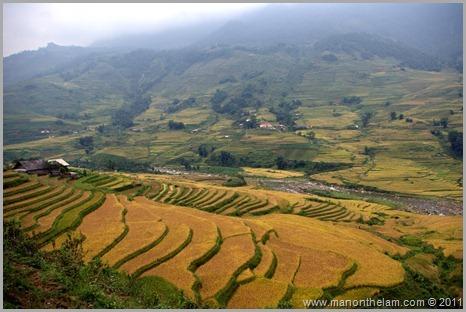 Rice paddy fields outside of Sapa Vetnam