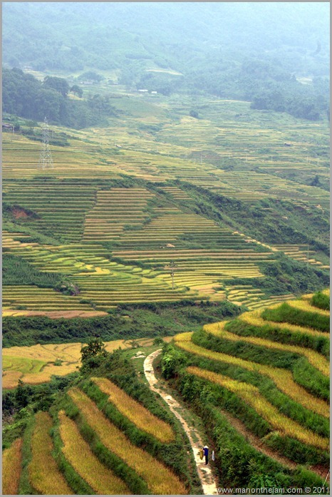 Rice paddy hills of Sapa Vietnam