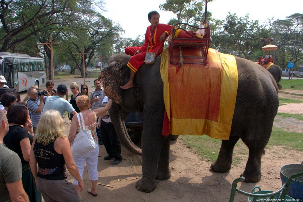 Thai Royal Elephant Elephants at Royal Elephant