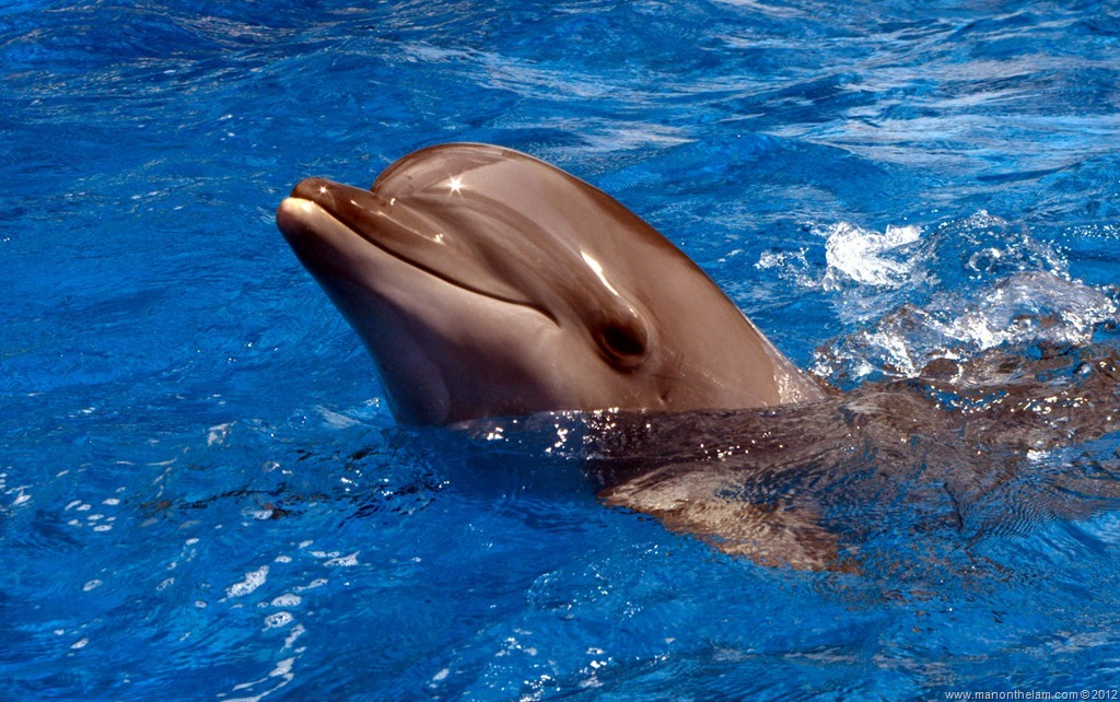 Dophin in Dolphin pool...