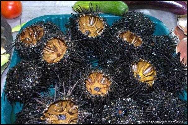 Sea Urchins, Night Market, Phu Quoc Vietnam
