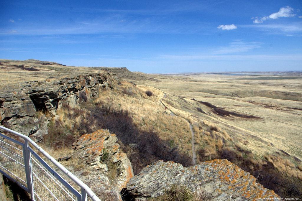 Bison running off cliff