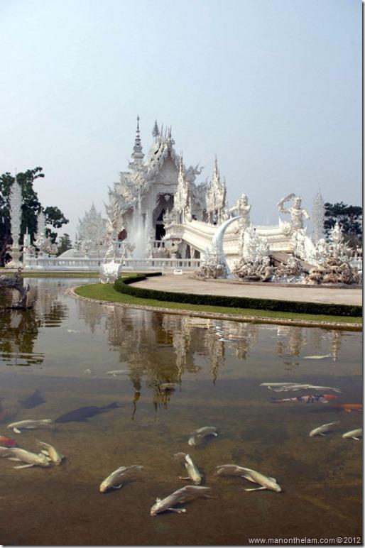 Koi in pond -- Wat Rong Khun, White Temple, Chiang Rai, Thailand
