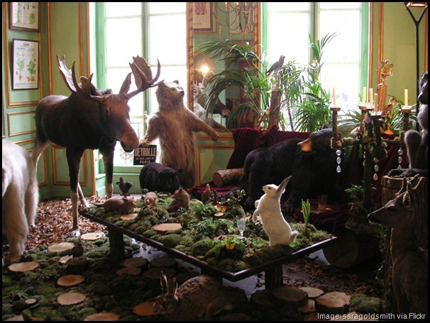 Stuffed animals at Deyrolle Taxidermy Museum and Shop, Paris, France