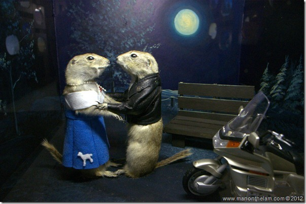 1950s moonlight gophers at Gopher Hole Museum, Torrington Alberta