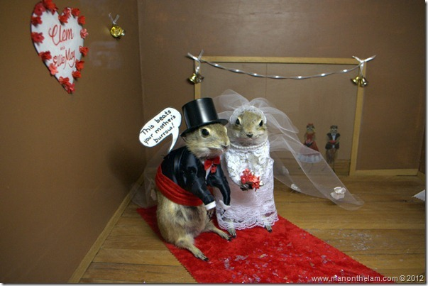 A gopher wedding at Gopher Hole Museum, Torrington Alberta