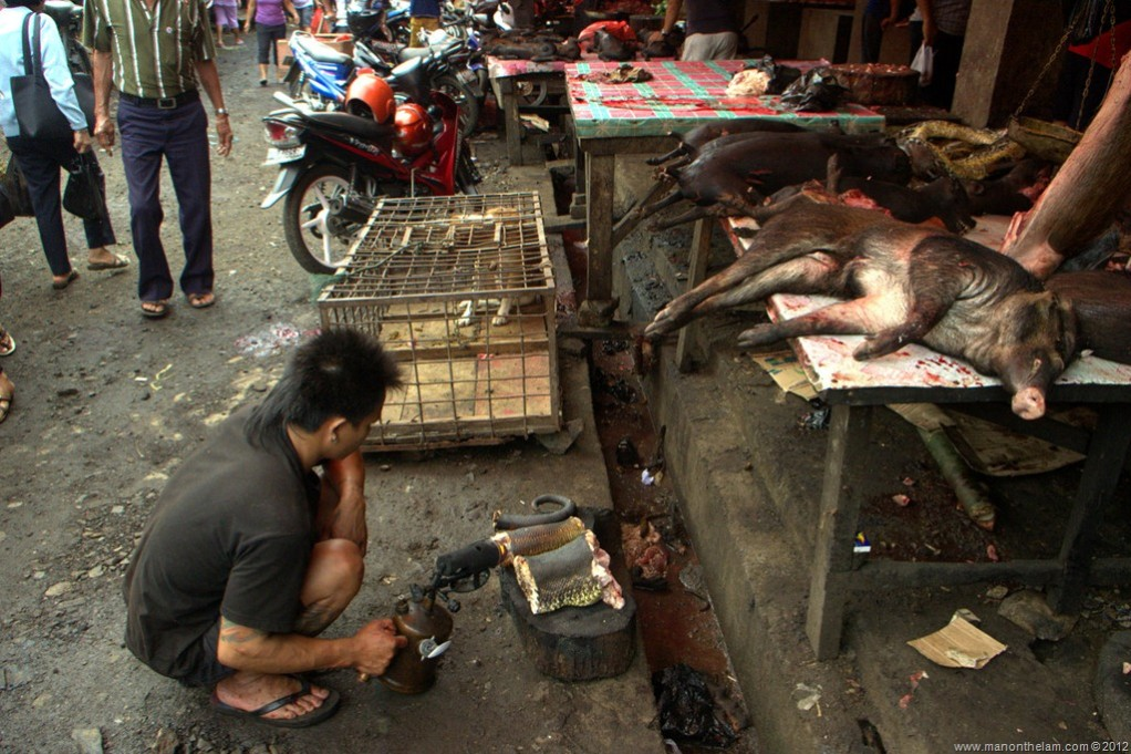Meat Market Macabre: The Gruesome Tomohon Market of Indonesia