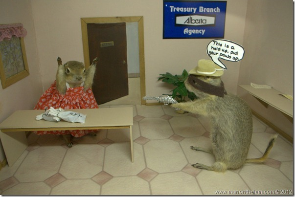 Bank robbery stuffed gophers at Gopher Hole Museum, Torrington Alberta