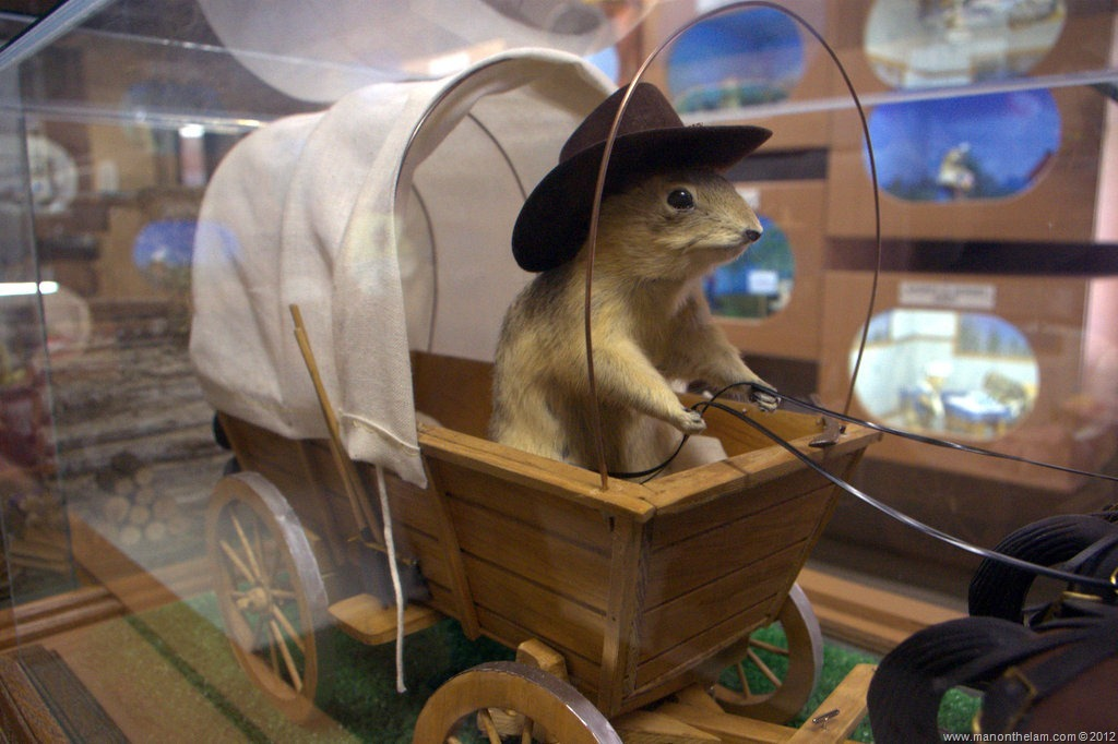 The Amazing Gopher Hole Museum Of Torrington Alberta