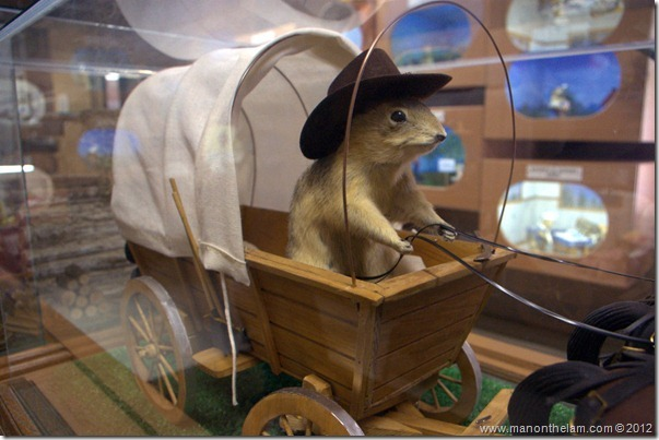 Chuckwagon stuffed gopher at Gopher Hole Museum, Torrington Alberta