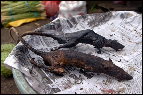 Dead Rats for sale at Tomohon Traditional Market, Tomohon, Sulawesi, Indonesia