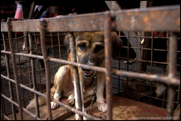 Dog in cage at Tomohon Traditional Market, Tomohon, North Sulawesi, Indonesia