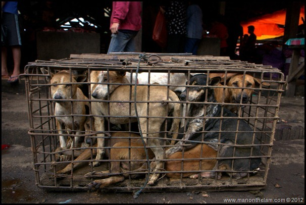 Dog's awaiting their fate as food at Tomohon Traditional Market, Tomohon, Sulawesi, Indonesia