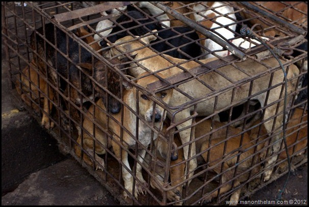 Dogs crammed in a cage awaiting slaughter Tomohon Traditional Market, Tomohon, North Sulawesi, Indonesia