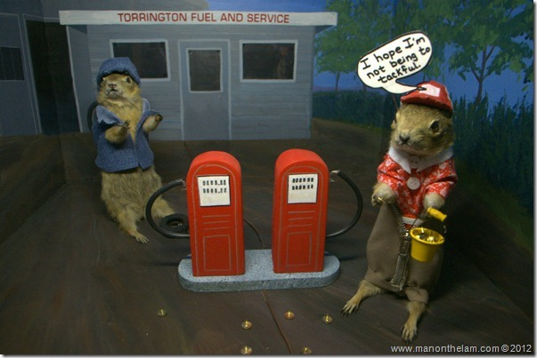 Gophers at a gas station at Gopher Hole Museum, Torrington Alberta