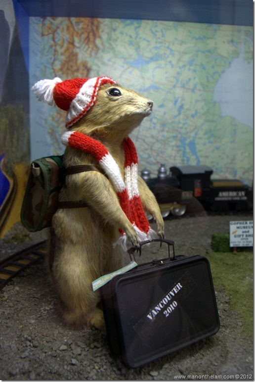 Olympic athlete stuffed gopher at Gopher Hole Museum, Torrington Alberta