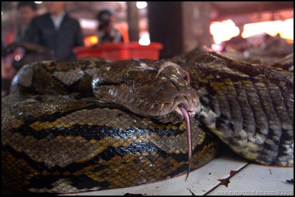 Snake at Tomohon Traditional Market, Tomohon, Sulawesi, Indonesia