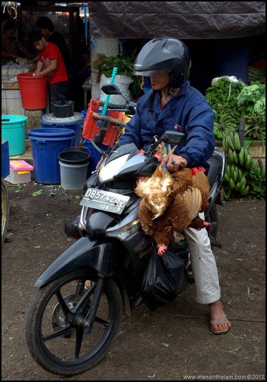 man on motorbike with live chickens -- Tomohon Traditional Market, Tomohon, North Sulawesi, Indonesia 11
