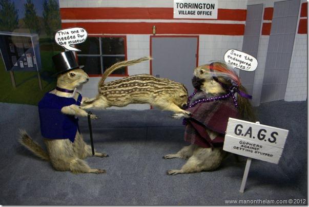 Town mayor versus PETA stuffed gophers at Gopher Hole Museum, Torrington Alberta