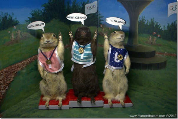 Winners of the gopher Olympics at Gopher Hole Museum, Torrington Alberta