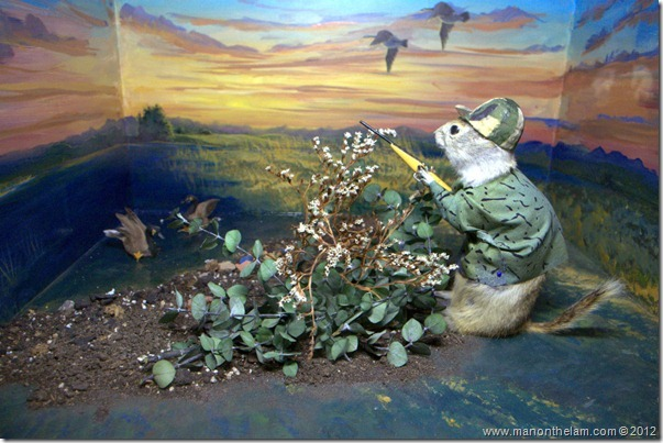 gopher hunting at Gopher Hole Museum, Torrington Alberta