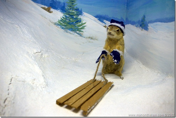 stuffed gopher with sleigh at Gopher Hole Museum, Torrington Alberta
