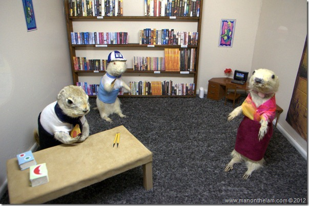 stuffed gophers in a library at Gopher Hole Museum, Torrington Alberta