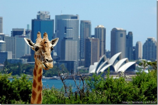 5 Quirky Things to Do in Sydney, Australia