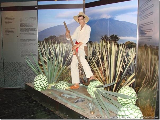 tequila herradura sensory museum -- cancun, mexico