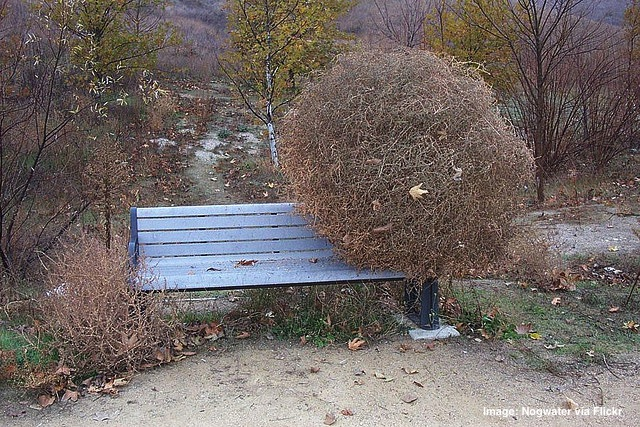 tumbleweed on a park bench