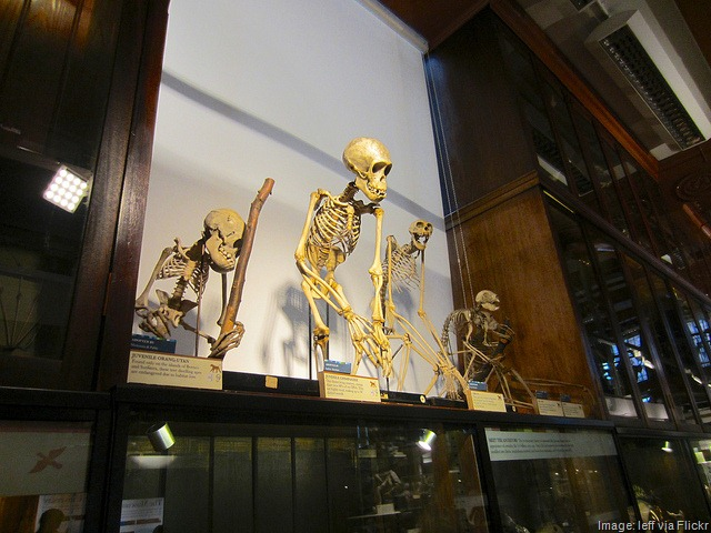 5 Quirky British Museums
