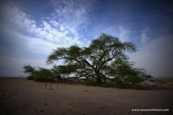 The Good Me/Evil Me Take on The Tree of Life in Bahrain