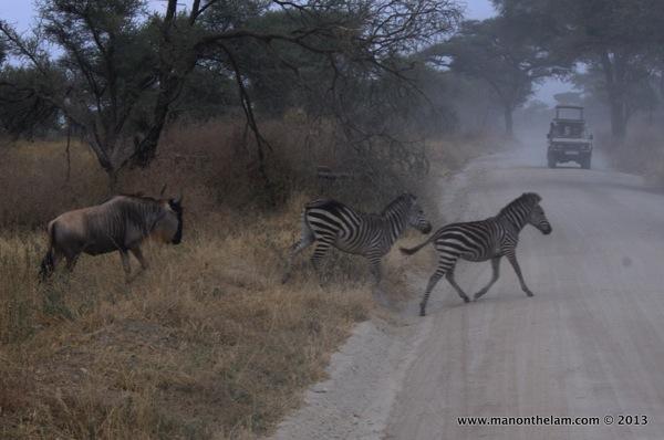 Tarangire National Park Tanzania 172