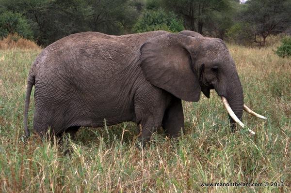 Elephant close-up -- Tarangire National Park, Tanzania