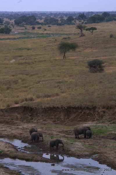 Herd of elephants, Tarangire National Park, Tanzania
