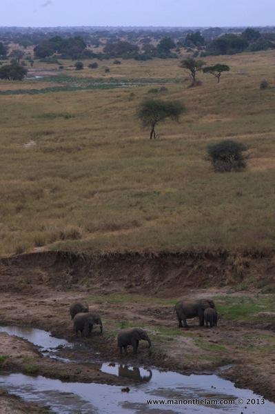 Herd of elephants, Tarangire National Park, Tanzania