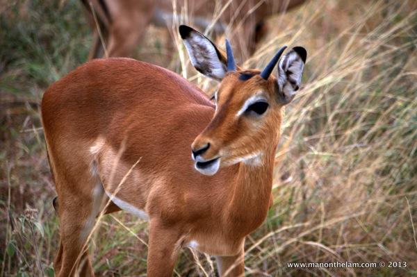 Tarangire National Park Tanzania 752