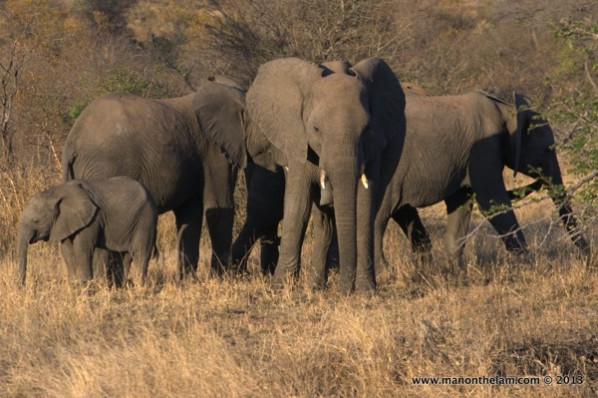 Kruger National Park vs. Private Game Reserve: Which is Better?