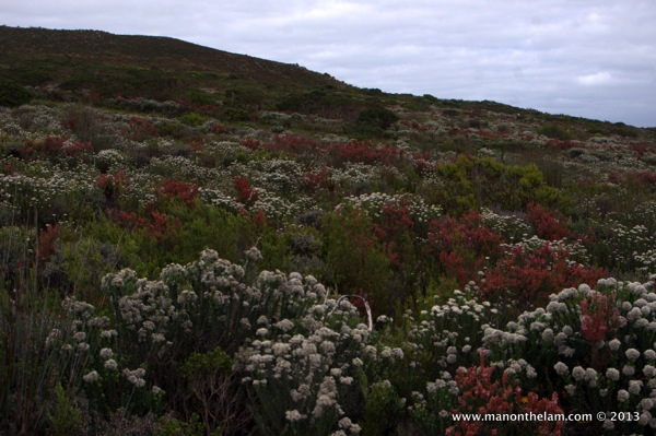 Grootbos-Private-Nature-Reserve-112.jpg